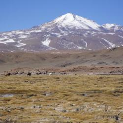 Sajama Bolivie